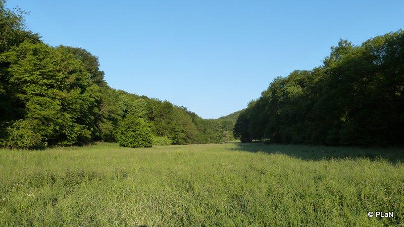 Landschaftsbild-und-Biotoptypen