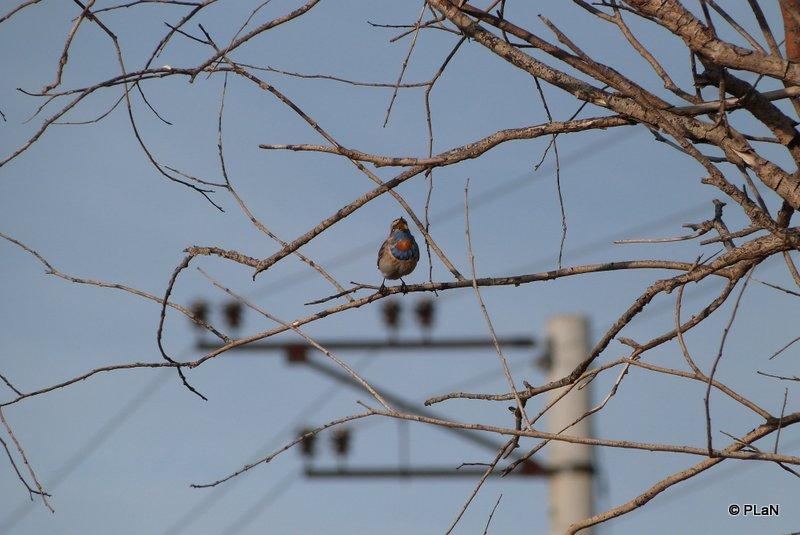 Brut-Rast-und-Zugvogelerfassung